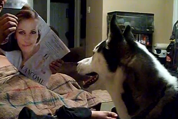 Husky_and_Julia_Roberts