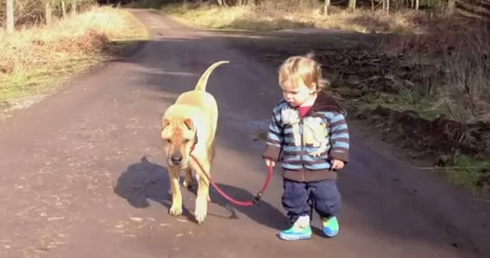 dog-toddler-on-walk
