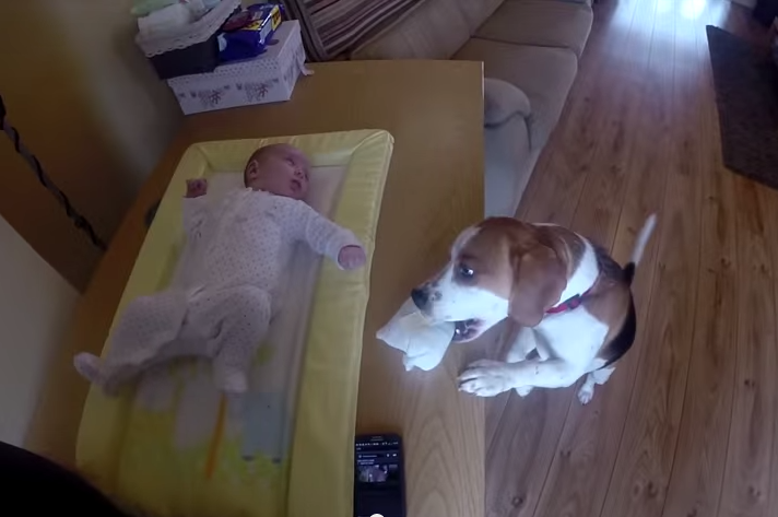 dog-helps-mother-change-babys-diaper-just-watch-2014-05-13-230843-20
