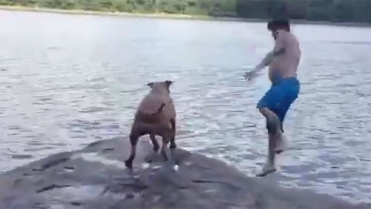 pit-bull-freaks-out-when-his-owner-jumps-into-a-lake