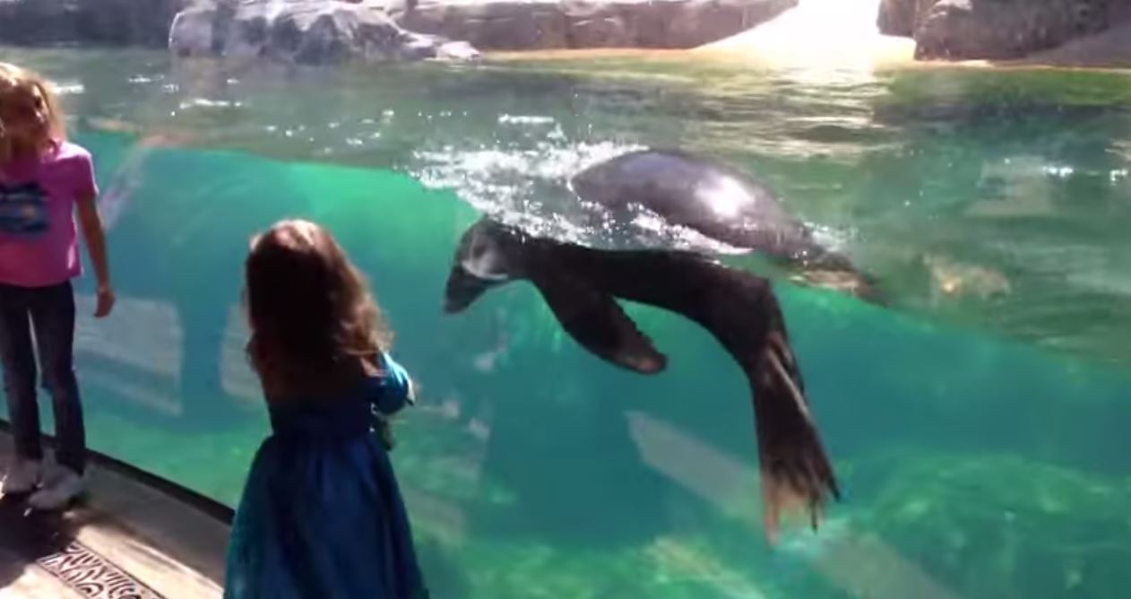 sea-lion-and-little-girl