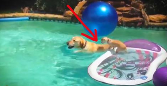 Puppy Surfs On Dog