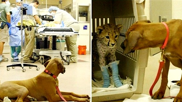 9.6.14-Raina-Guards-Ruuxa-During-Surgery1