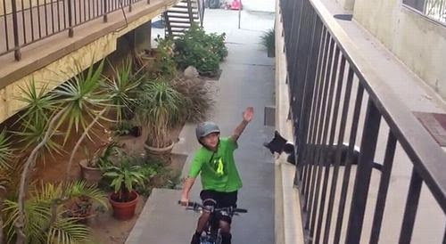 Cat_High_Fives_Kid_on_Bike