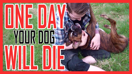 ONE DAY YOUR DOG WILL DIE