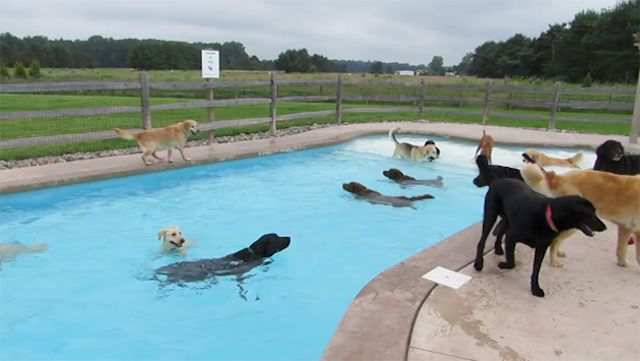 Puppy-pool-party-640px-youtube