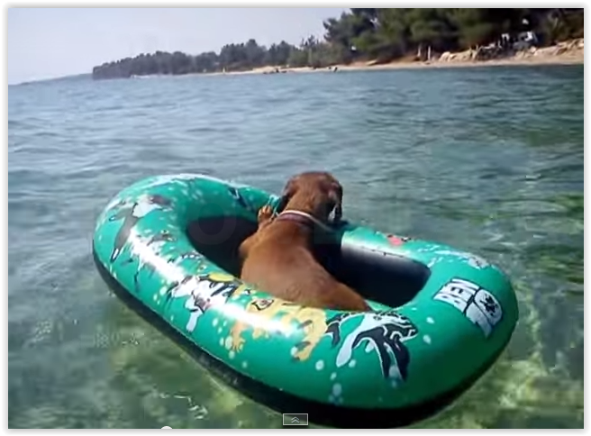 Dachshund on holiday