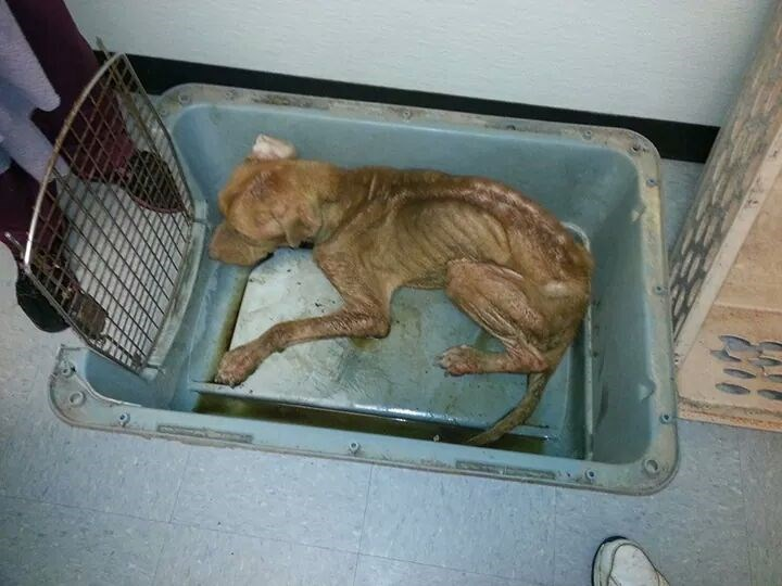 A heart breaking story. They found Sampson close to death and locked, but he was finally rescued.