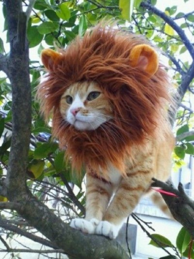 Simba, is that you? Owners of this cat should teach her how to roar!
