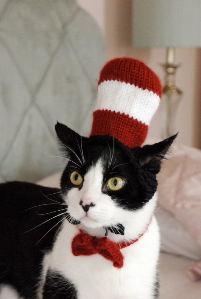 Cat in the hat alert! This costume will look amazing if your cat is black and white.