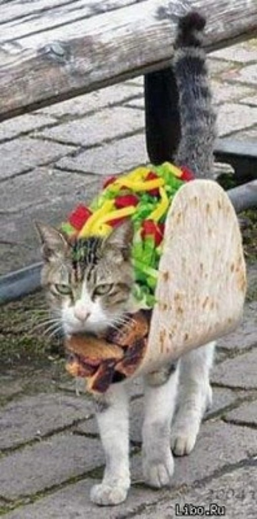 Okay, now I'm hungry because of this Taco costume.