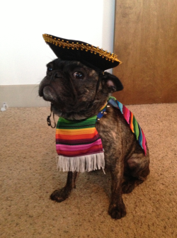 Mexican costume for Mexican dogsu2026 or dogs who live in Mexico. & 20 Hilarious yet adorable Halloween costumes for your dog u2013 Pets Fans