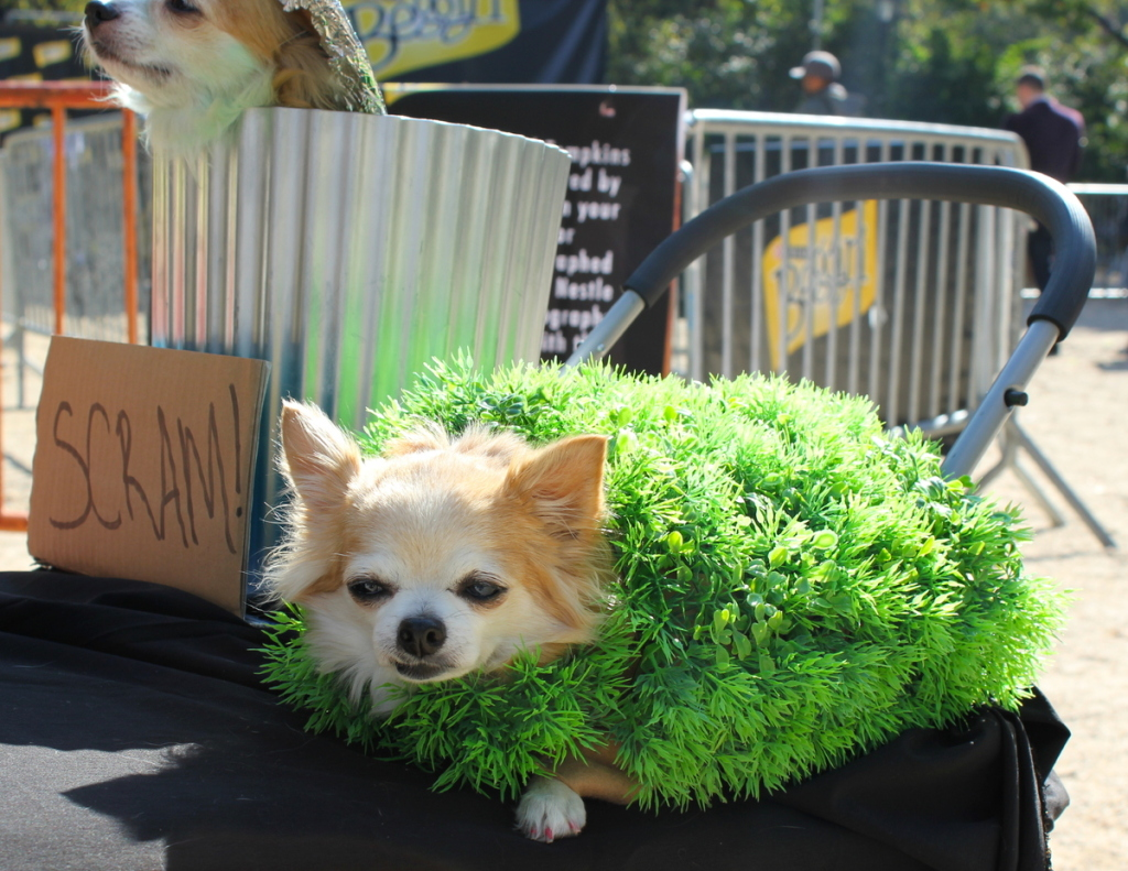 Best costumes in the Halloween Dog Parade. – Pets Fans