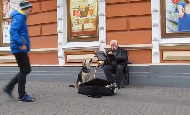 A stray dog joining the musician and sings with him.