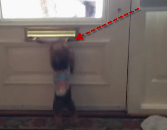 Watch this dog go crazy when the mail man arrives, it's hilarious.