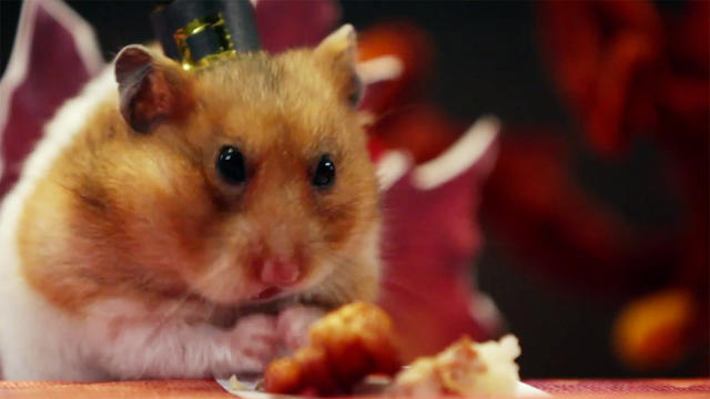 3038739-inline-i-3-hamster-thanksgiving