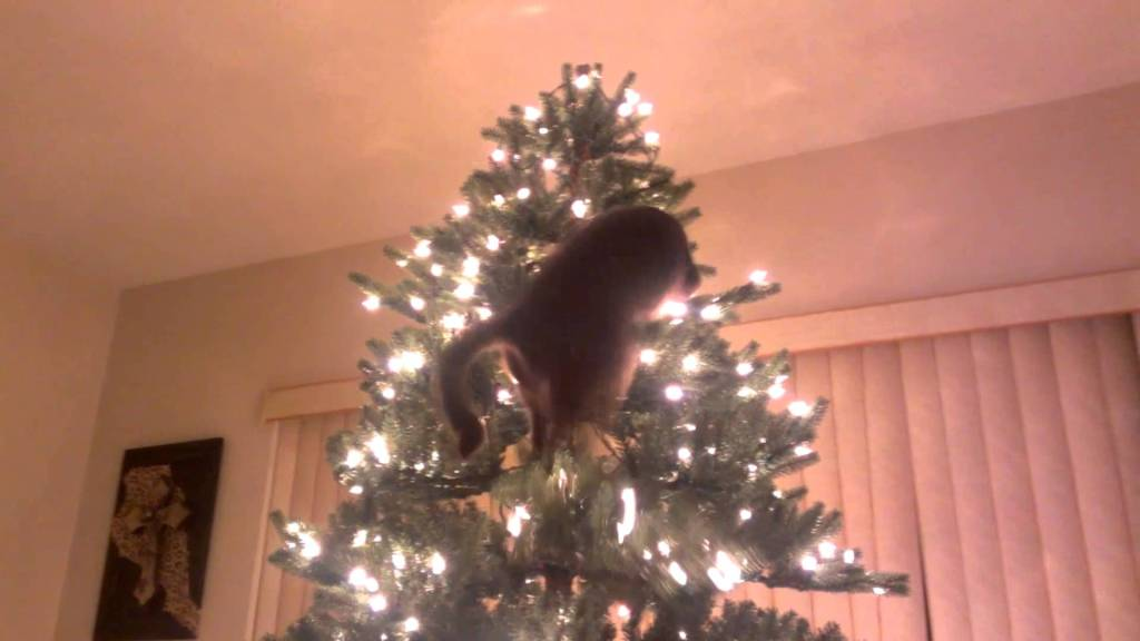A funny cat video of a cat who hates the Christmas tree.