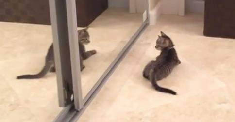 A funny kitten watching her reflection in the mirror for the