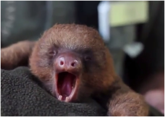 """I am sleepy. But I have the cutest yawn ever, right?"""""""""""