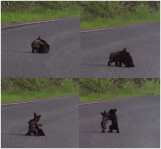 Those two cubs were on the driveway, they are adorable!
