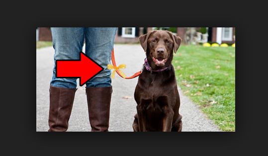 "As a part of ""the yellow dog project"", see what a yellow ribbon tied on a dog's collar means."
