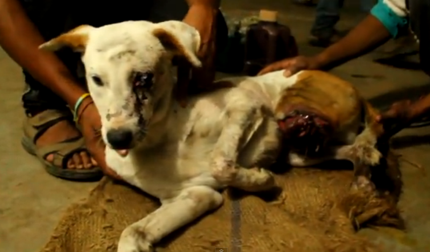 After this injured dog was nearly killed, a volunteer changed his life.