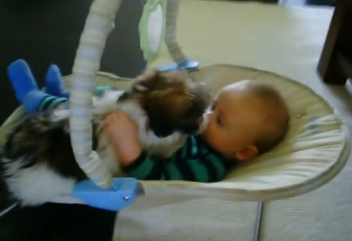 A new puppy wants to cuddle with his same-sized baby friend. Super cute!