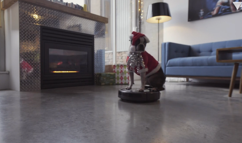 An amazing video of a Boston terrier dog dressed as Santa and riding a Roomba.