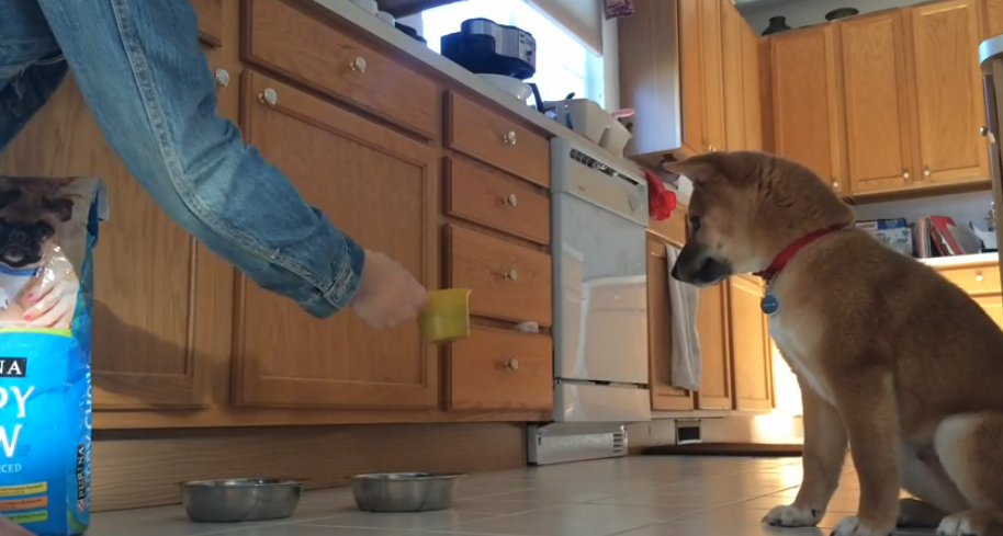 He recorded for his dog every day at his mealtime, the result was hilarious!