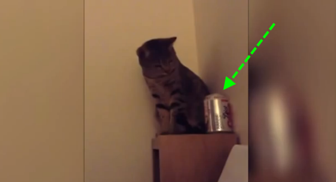 funny cat video