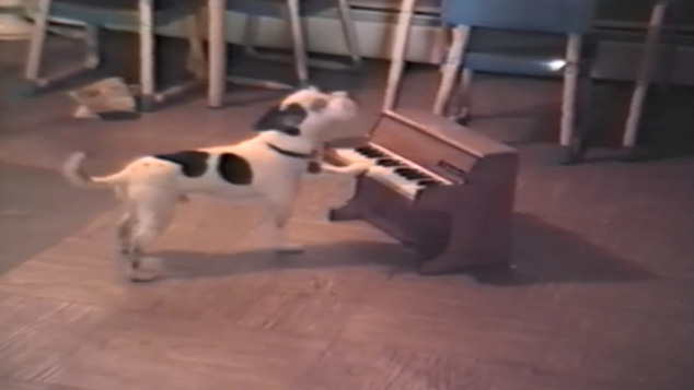 Dogs' got talent; you will be amazed by this musician dog.