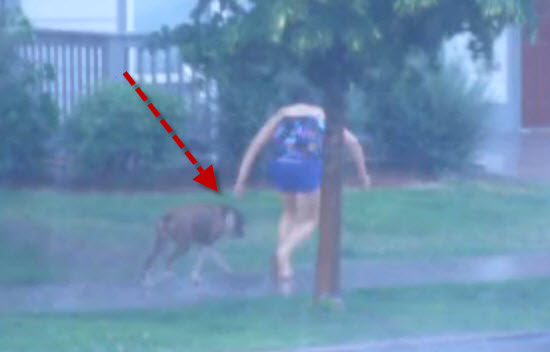 She found an abandoned dog tied to the tree in thunderstorm weather, what she did is an epic.