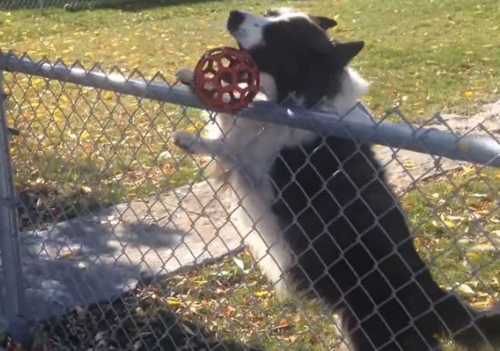 A guy was passing by the backyard when he found a funny dog who invited him to play fetch.