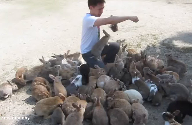 instead of bunnies eating their food, they ate the guy who was feeding them, it's totally funny