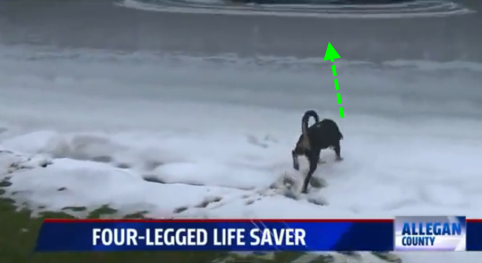 A dog saves her friend's life after she fell in a frozen pond.