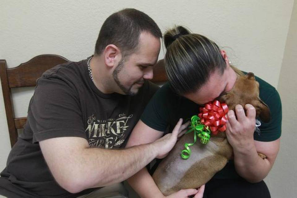 After the pet was offered a free surgery, Lola the dachshund dog was her family's Christmas gift.