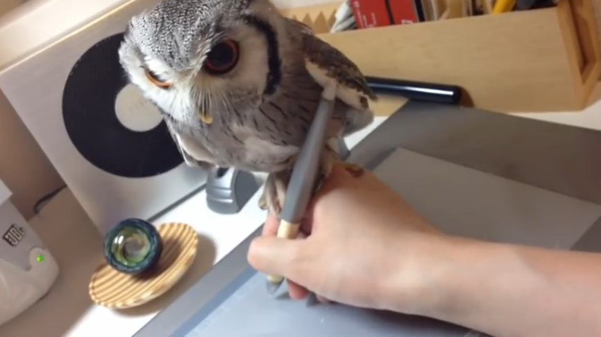 An owl stands on its owner's hand while he is drawing, it's adorable.