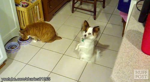 Cats_Steal_Dog_Food