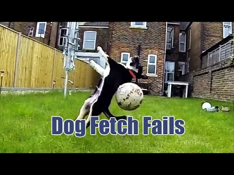 Dogs who fail in the fetch game are finally caught on camera, hilariously funny.
