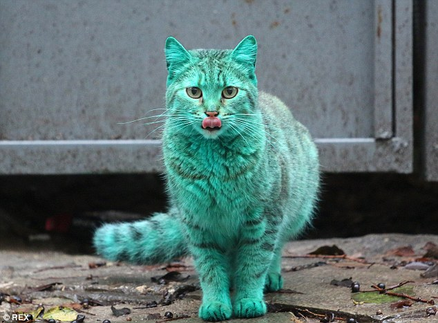 Meet the green cat! The most famous cat on internet.