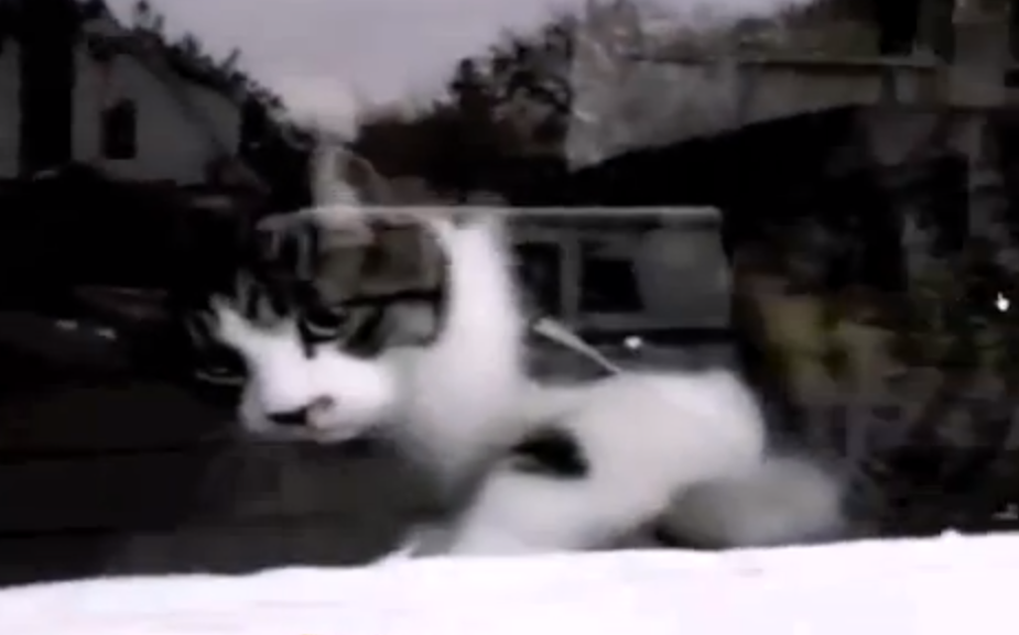 funny-cat-video