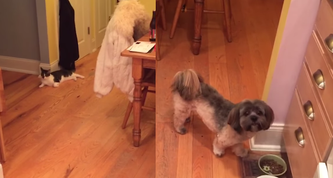 Sophie the dog attacks this poor cat each time their owner does that