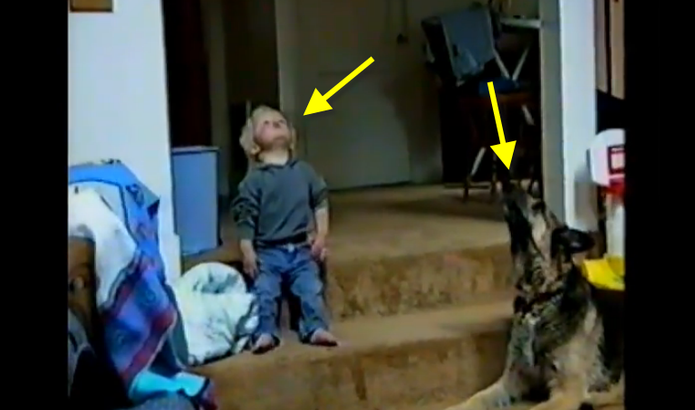 This dog is giving howling lessons to this baby boy, it's the cutest ever.