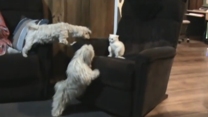 Two dogs tried to attack the cat, but the hero dog was there to protect her, it's incredible.
