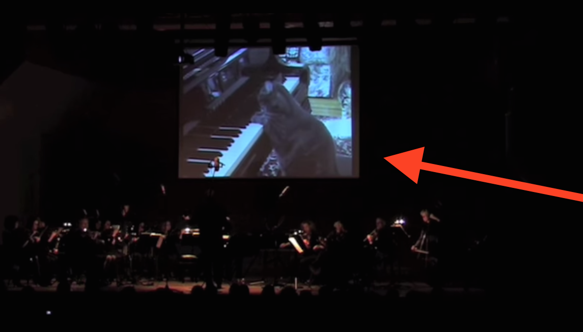 catcerto-cat-musical-performance-orchestra1