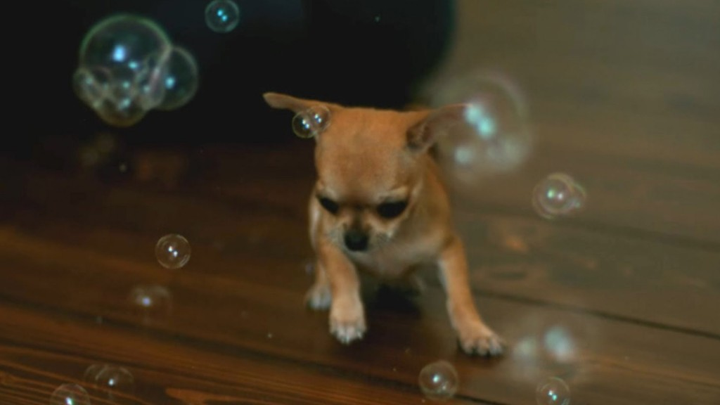 chihuahua-bubbles-some-cute-slow