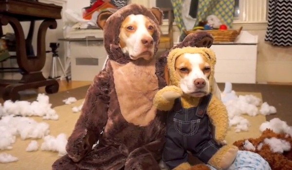 Mr. Teddy Bear visits beagle dogs for Christmas, absolutely hilarious.