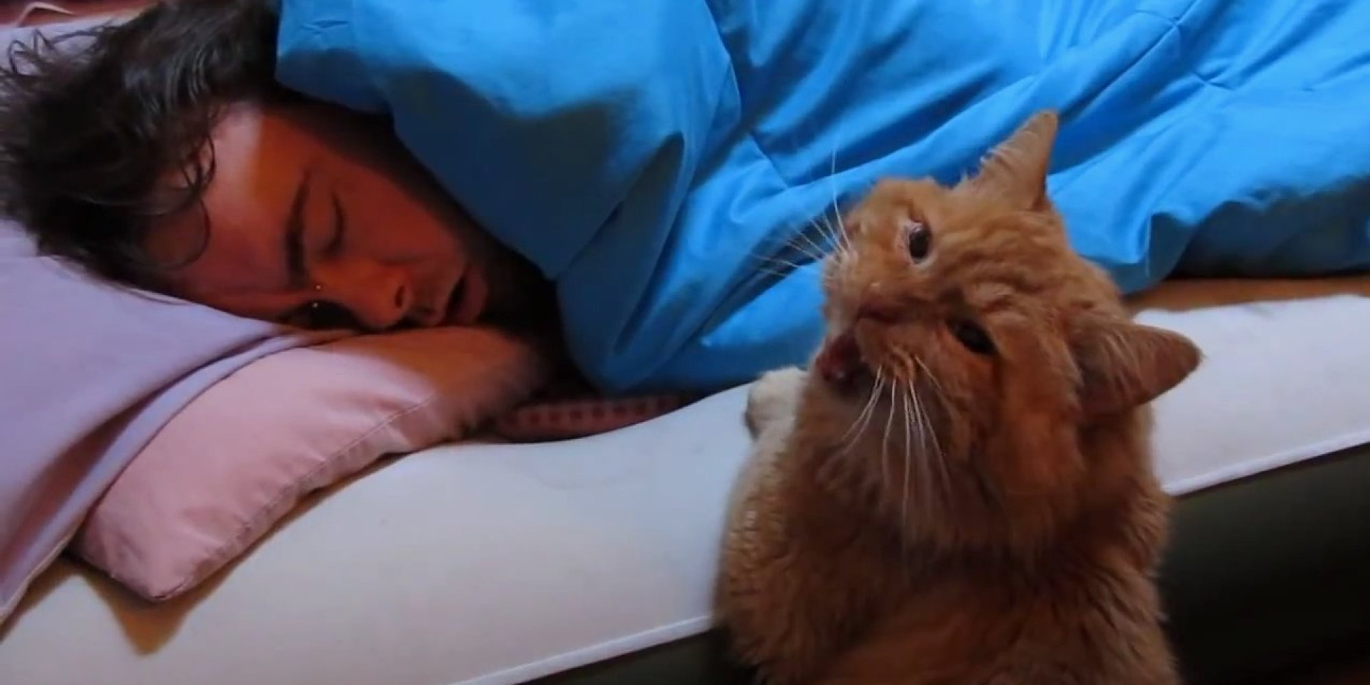 "The funniest compilation ever of ""Cat Alarm Clock""."