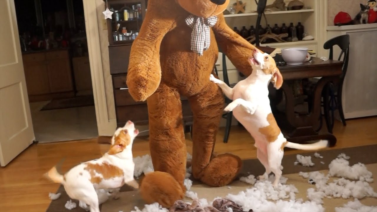 Mr. Teddy Bear visits beagle dogs for Christmas