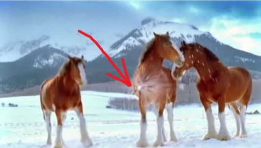 they-threw-a-snowball-to-these-horses-their-reaction-im-floored-2014-12-10-121911-81